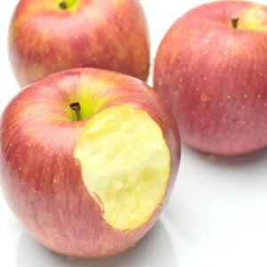 りんご 旬の産地より りんご 5kg をお届けします