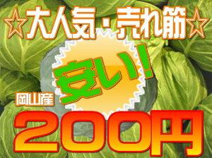 【岡山県産】キャベツ☆大ヒット売れ筋☆吉備高原のキャベツ(お一人様1玉限り!)