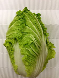 【岡山県産】  白菜 1玉