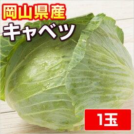 【岡山県産】 キャベツ