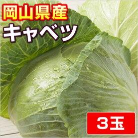 【岡山県産】キャベツ3玉・吉備高原のキャベツ