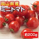 【岡山県産】 ミニトマト 1P
