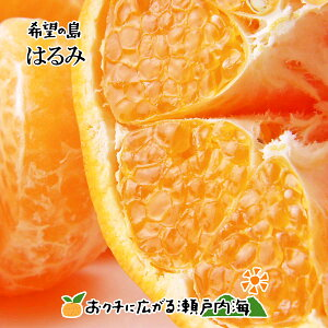 希望の島 はるみ 8kg 贈答用(赤秀) 大玉 愛媛 中島産 みかん 柑橘