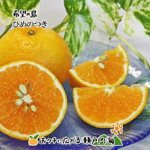 希望の島 ひめのつき 7kg 贈答用(赤秀) 中玉 愛媛 中島産 みかん 柑橘
