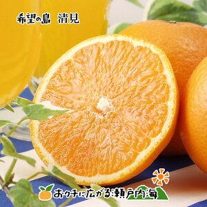 【訳あり】希望の島 清見オレンジ 5kg サイズ込 愛媛 中島産清見タンゴール