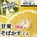 甘夏 無農薬 5kg サイズ込 愛媛 中島産 爽やかな香り!【希望の島 甘夏そばかすくん 5kg】