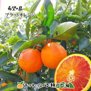 希望の島 ブラッドオレンジ(タロッコ) 5kg 贈答用 中玉 愛媛 中島産国産 blood orange