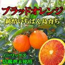 【訳あり】希望の島 ブラッドオレンジ(タロッコ) 5kg サイズ込 国産 愛媛 中島産加工用 blood orange