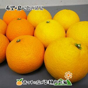 希望の島 2色の清見セット 10kg 家庭用 サイズ込 愛媛 中島産清見オレンジ 5kg サマー清見 5kg