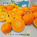 【訳あり】希望の島 旬の柑橘詰合せ 5kgみかん 中島まどんな(紅まどんな同品種) だいだい レモン 天草 ポンカン 伊予柑 はれひめ はる…