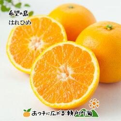 愛媛・中島産ブラッドオレンジ(タロッコ)