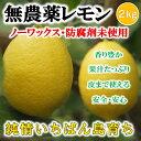 無農薬レモン 国産レモン 愛媛・中島産 2kg【希望の島 レモン 国産 無農薬 訳あり】