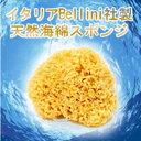 あす楽 天然海綿ハニコム 16cm 天然海綿スポンジ ハニコムスポンジ