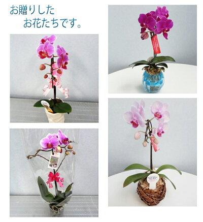 https://image.rakuten.co.jp/kihana-shop/cabinet/03434476/img60469682.jpg