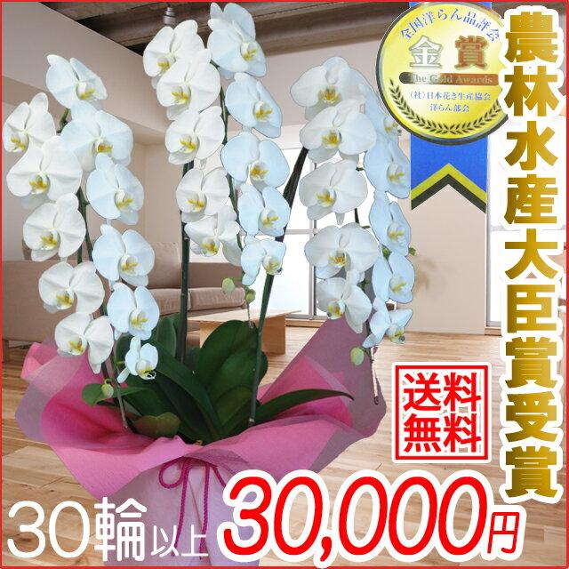 胡蝶蘭(コチョウラン)大輪 白 3本立ち 30輪前後〜 退職祝い【送料無料】(9)