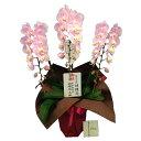【楽天1位】日光東照宮に献上品として唯一認定された胡蝶蘭を蘭のフレンズより産地直送送料無料】【移転祝い】