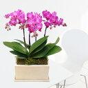 ミディ3本立オリジナル陶器鉢 ピンク系■送料無料■ミディ胡蝶蘭 内祝い