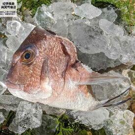 三重県産 養殖マダイのカシラ【 タイ 鯛 真鯛 】 買いまわり ポイント消化
