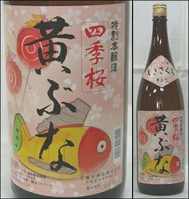 栃木・宇都宮酒造【四季桜】特別本醸造 黄ぶな 1800ml