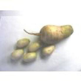 信州辛味大根(長野県産)ねずみ大根お徳用2kgセットねずみ大根の本場である長野県坂城町限定のねずみ大根を販売しております。
