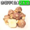 今話題の菊芋 北海道産、無農薬、化学肥料不使用 菊芋/生/土付き/赤/2kg