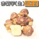 今話題の菊芋 北海道産、無農薬、化学肥料不使用 菊芋/生/土付き/赤/3kg