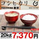 コシヒカリ 環境こだわり米 玄米20kg×1袋【平成29年:滋賀県産】】(西濃運輸に限る)
