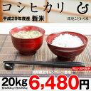 【新米!】コシヒカリ 環境こだわり米 玄米のまま20kgまたは精米済み白米20kg【平成29年・滋賀県産】