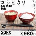 お米 新米 【9月の特別米】コシヒカリ 環境こだわり米 玄米のまま20kgまたは精米済み白米20kg【平成30年:滋賀県産】