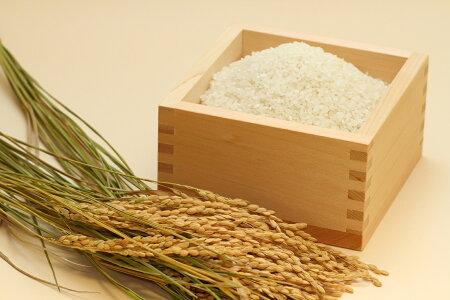 【福袋米】白米10kg【平成29年・滋賀県産】10kg×1袋でのお届けです♪】【送料無料】(西濃運輸に限る)