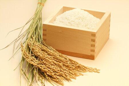 ミルキークイーン玄米のまま20kgまたは精米済み白米20kg環境こだわり米【令和元年:滋賀県産】【送料無料】