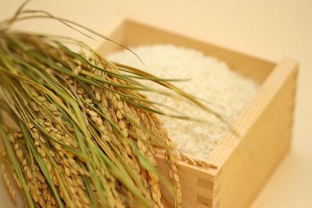 【無洗米】コシヒカリ10kg【平成30年:滋賀県産】