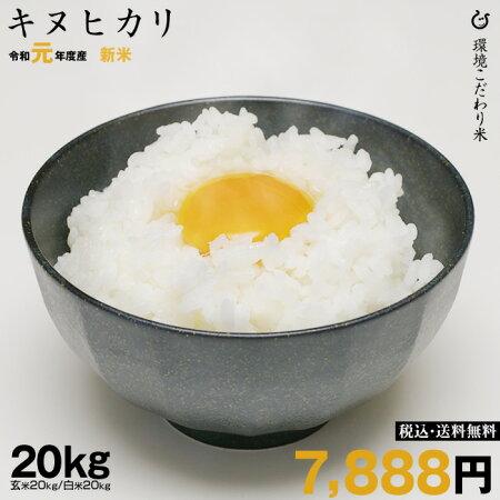 【3月の特別米】キヌヒカリ環境こだわり米玄米のまま20kgもしくは精米済み白米20kg【令和元年:滋賀県産】【送料無料】