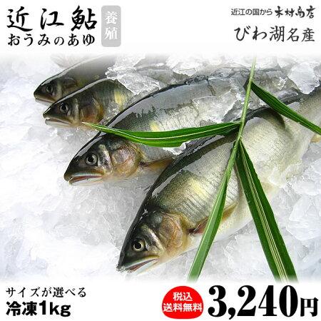冷凍あゆ【近江鮎】1kg【びわ湖名産】