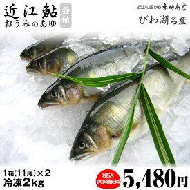 冷凍鮎 【近江鮎】 2kg(11尾×2)【びわ湖名産】
