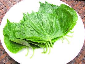 えごまの葉 一束(約10枚)(エゴマ)[韓国食材] お取り寄せ