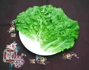 チシャ菜 一束(約10枚)(サンチュ)[韓国食材]