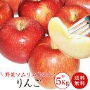 【送料無料】【数量限定】 野菜ソムリエ厳選!! 安曇野産のおいしいりんご 約5kg 14玉〜20玉 ※北海道及び一部離…