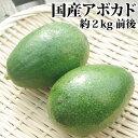 【ご予約入荷待ち】愛媛県産アボカド 約2kg前後(精品・1kg当たり3〜7個程度 ※入荷により大きく異ります)ベーコン種…
