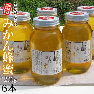 愛媛産 みかん蜂蜜1200g×6【R3年産】 【段ボール箱】 爽やかな蜜柑はちみつ