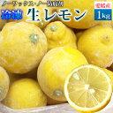 愛媛県産 冷凍 生レモン1kg/加工はしていません。国産レモンの無くなる夏場にどうぞ。【ノーワックス】・【ノー防腐剤】【愛媛県産】【非加工品】【冷凍便】