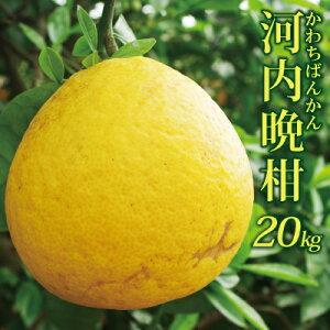 愛媛産 精品河内晩柑20kg(10kg箱×2)