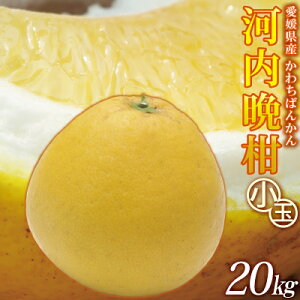 愛媛産 小玉河内晩柑20kg(10kg箱×2)