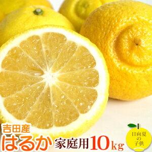 低刺激、淡白な味。愛媛産はるか10kg 【送料無料(北海道沖縄送料別途】