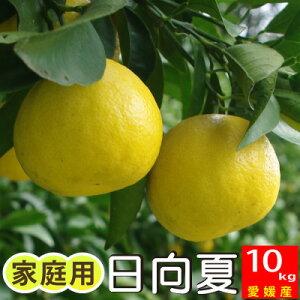 【ご予約4月下旬発送】愛媛産日向夏10kg (別名:小夏、ニューサマーオレンジ)