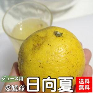 【ご予約5月発送】愛媛産ジュース用日向夏10kg(別名:小夏、ニューサマーオレンジ)