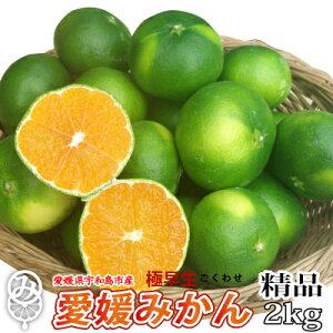 【9月中旬発送開始】極早生 愛媛みかん2kg 精品(サイズ不揃い)