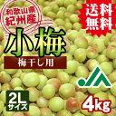 【送料無料】<梅干し用>紀州産小梅(2Lサイズ) 4kg×1箱 ★和歌山県の農協JA紀南より安全安心な小梅をお届けします♪青梅