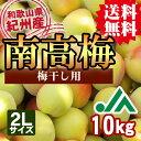 【送料無料】<梅干し用>紀州産南高梅(2Lサイズ) 10kg ★和歌山県の農協JA紀南より安全安心な青梅をお届けします♪