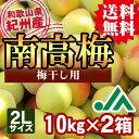 【送料無料】<梅干し用>紀州産南高梅(2Lサイズ) 10kg×2箱 ★和歌山県の農協JA紀南より安全安心な青梅をお届けします♪